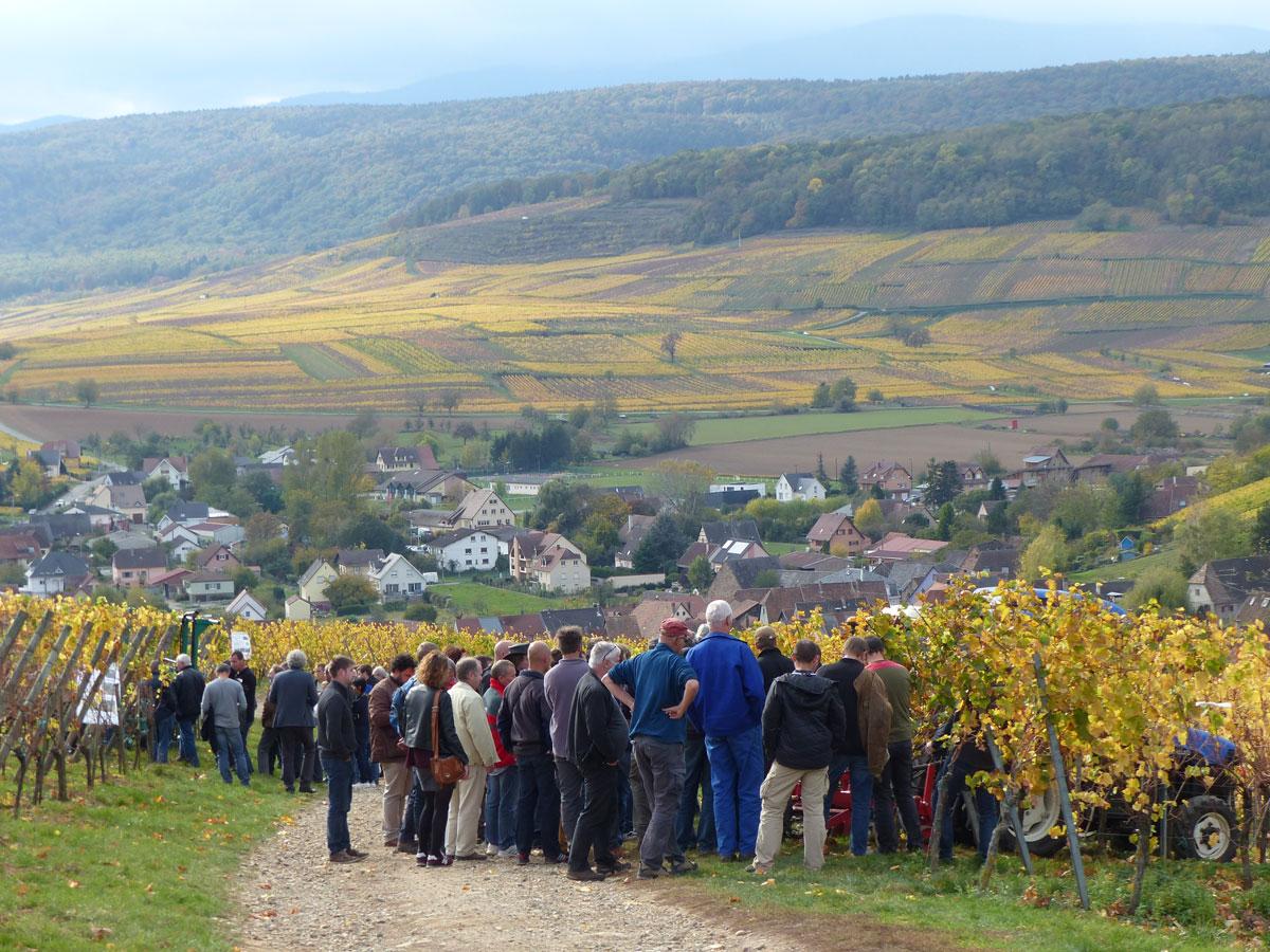 Les défenses naturelles plus élevées pour les vignes en biodynamie
