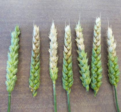 Biocontrôle – Des effets à transformer