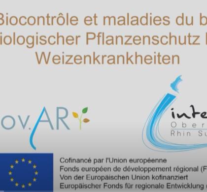 [Vidéo] Biocontrôle et maladies du blé